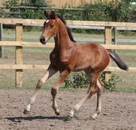 foal pic.jpg