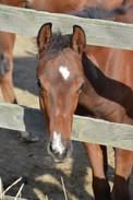 Foal 3 .jpg