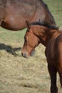 Foal 4 .jpg