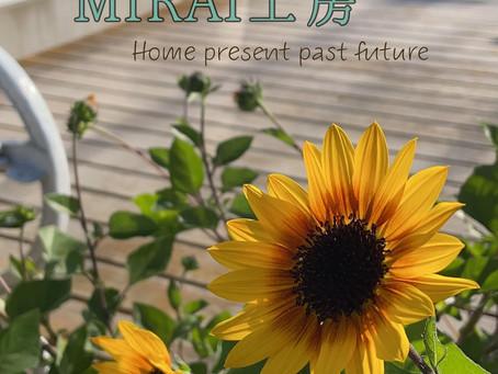 MIRAI工房garden・秋の向日葵