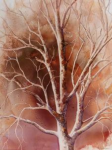 Sycamore in Winter II