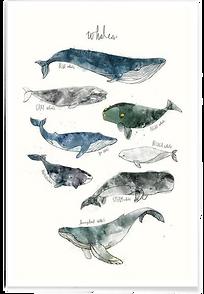 1.Affiche_Whales Amy Hamilton_juniqe.png