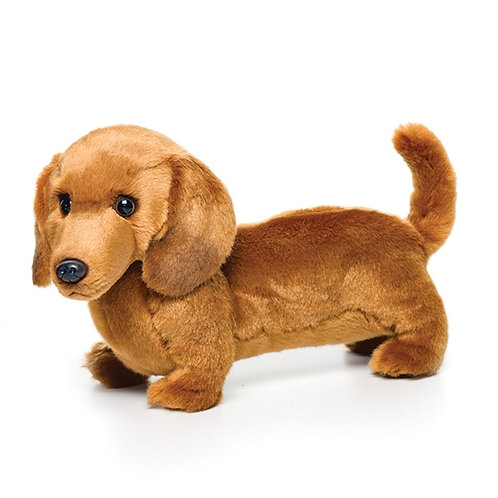 «Teckel» le chien saucisse