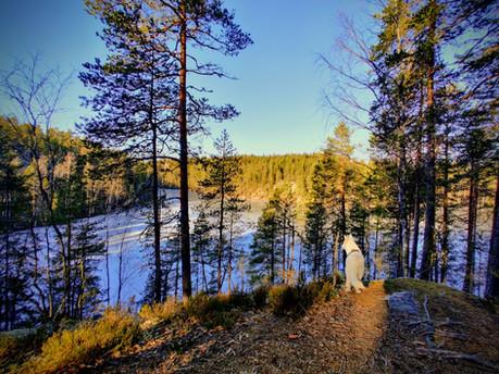 Kimolan luontopolun huimat maisemat Valkialammen suuntaan.