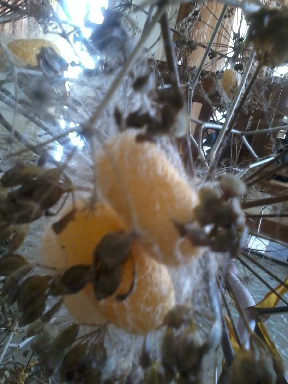 Silk cocoons
