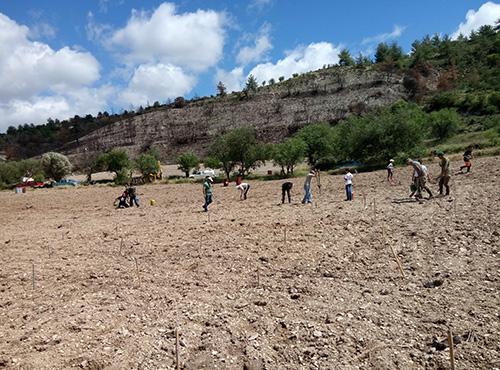 Community Vine Planting