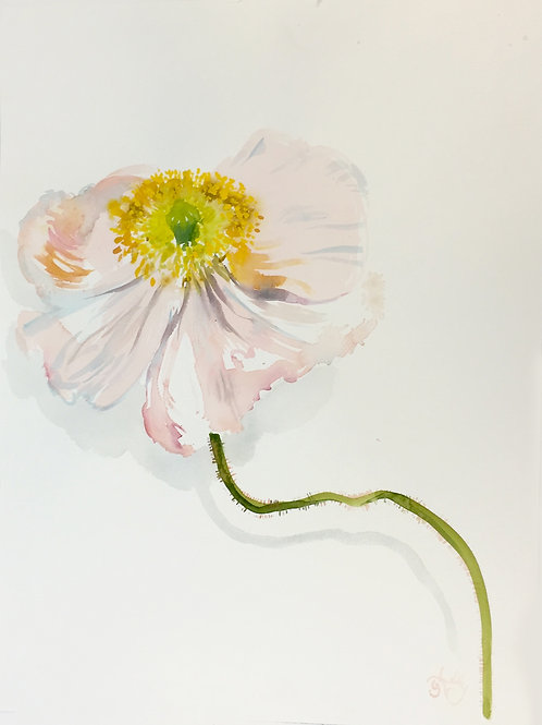 Pale Pink Poppy and drop shadow SOLD