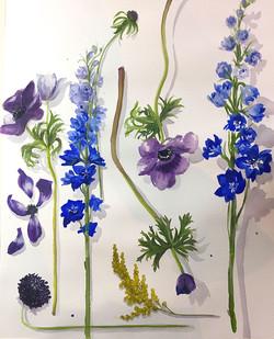 Study of Blue Flowers