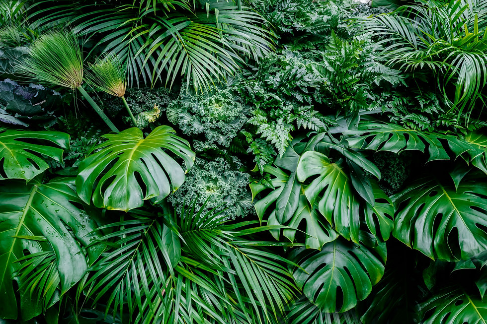 Tropical green leaves background, fern,
