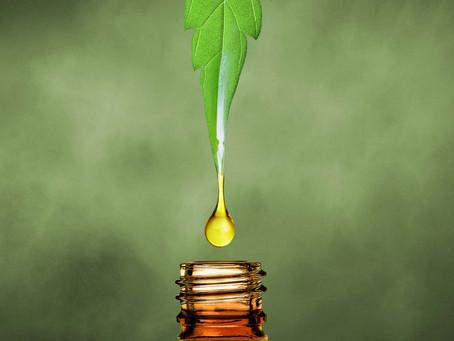 CBD oil: Controversial or Curative?