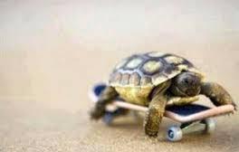 smart turtle