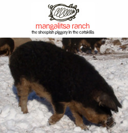 Mangalitsa Ranch 2