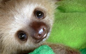 Sloth – The Bringer of Peace?
