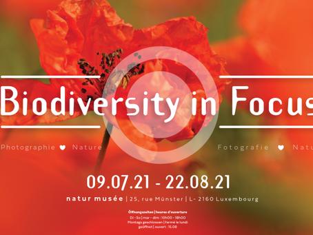 Biodiversity in Focus
