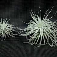 2020airplants01.jpg