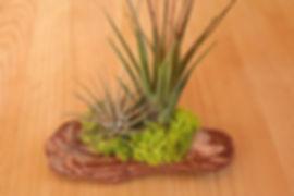 redwood02.jpg