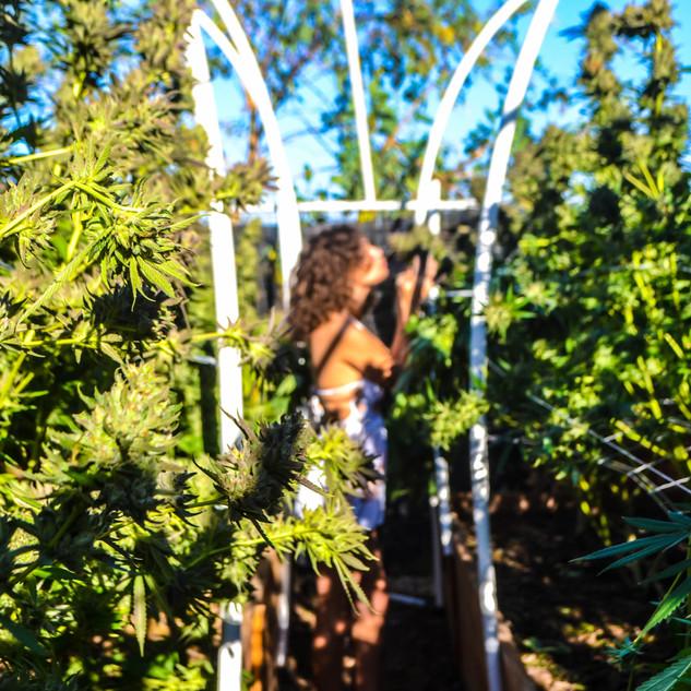 Zoey Garden of Weeden Goddess-7.jpg