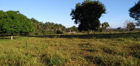 fazenda_campoverde_matogrosso (3).jpg