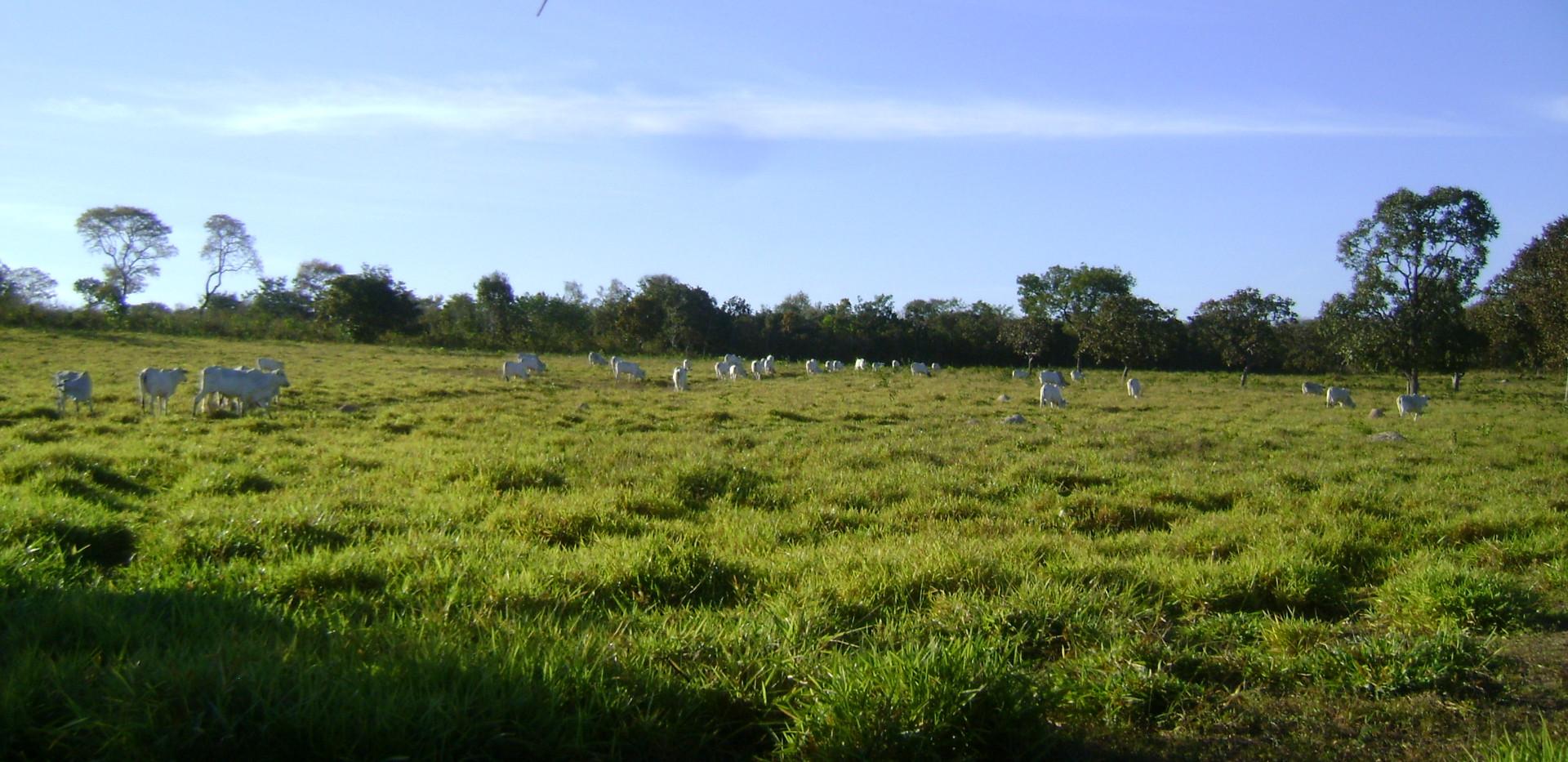 fazenda_campoverde_matogrosso (2).JPG