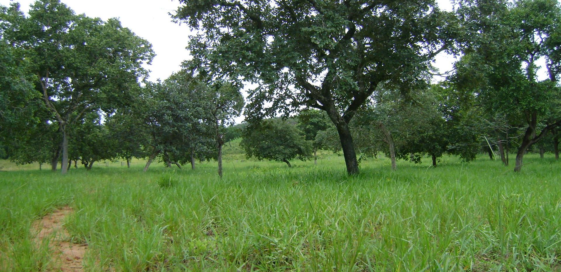 fazenda_campoverde_matogrosso (1).JPG