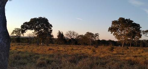 fazenda_campoverde_matogrosso (2).png