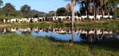 fazenda_campoverde_matogrosso (4).jpg