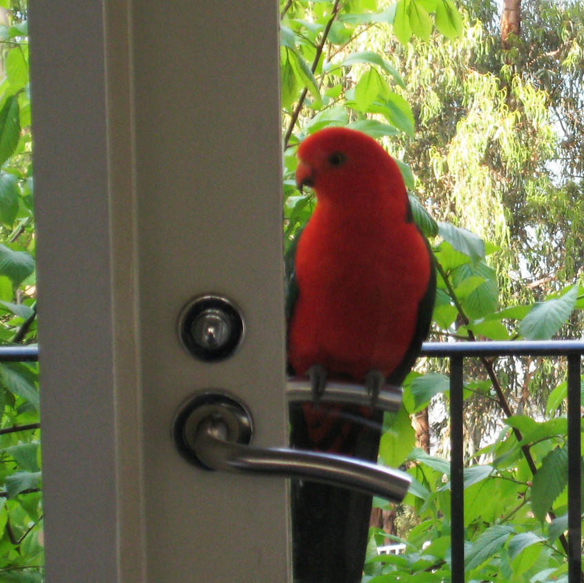 PARROT wants to come in