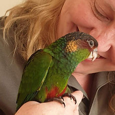 Blue Throated Conure. 2jpg.jpg