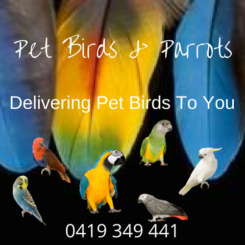 Pet Birds For Sale! Hand Raised Birds Delivered To You - Lifestyle Bir