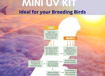 Bird Lighting Solutions