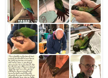 Conures Are Great Companions