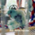 Blue Marble Parrotlet_edited.jpg