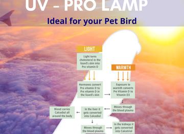 The Parrot Pro Lamp