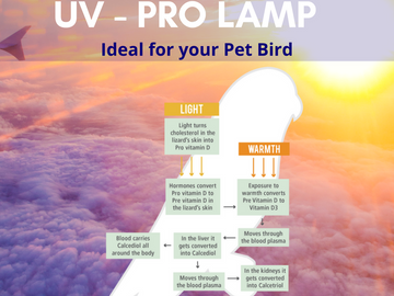 The Parrot Pro Lamp