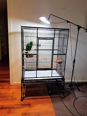 Arcadia Parrot Pro Lamp