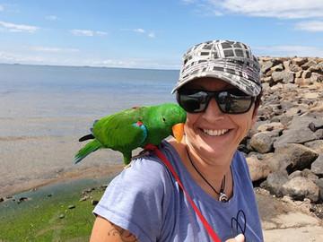 Eclectus Parrots Hand Raised