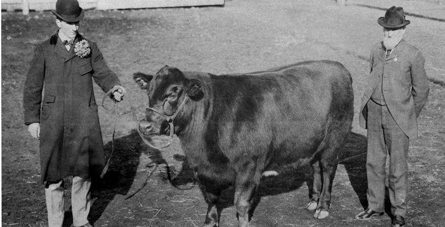 First International Steer Show