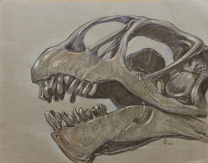 ORIGINAL ~ Brachiosaur Study at the Museum of Natural History of New York City
