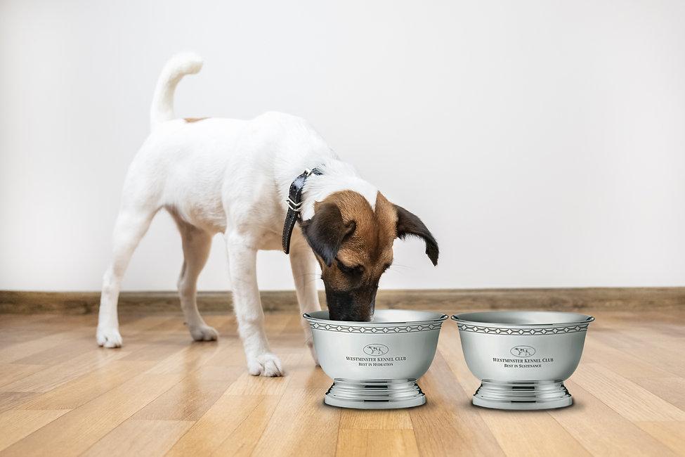 dog bowl mockup.jpg