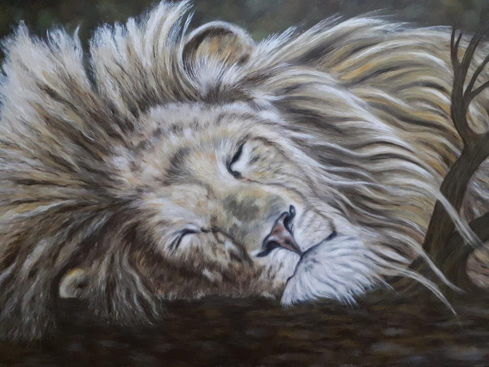 Prachtieg leeuw.jpg