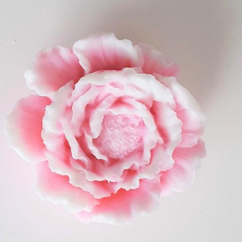 "Zeep ""Rose"""