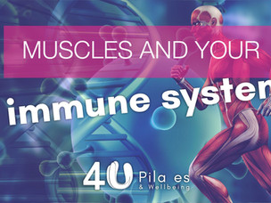 Muscles and the immune system