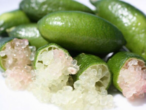 What is a Australian Finger Lime?