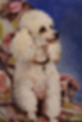 Small Painting Winner - French Poodle by