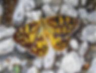 scott_butterfly.jpg