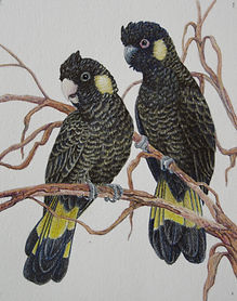 Janet Matthews-Black cockatoos.jpg