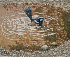 JanetM-Blue wren-Puddle bath8H10WTN.jpg