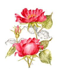 Joan Lopes -- Floral.jpg
