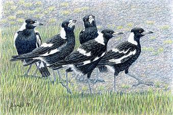 JanetMatthews-Magpies.jpg