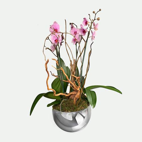 Orquídea de doble vara 3